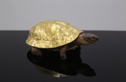 a turtle with gold!